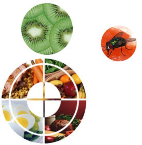 Seguridad Alimentaría Canarias