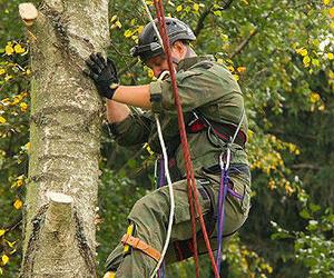 Tala de árboles en altura