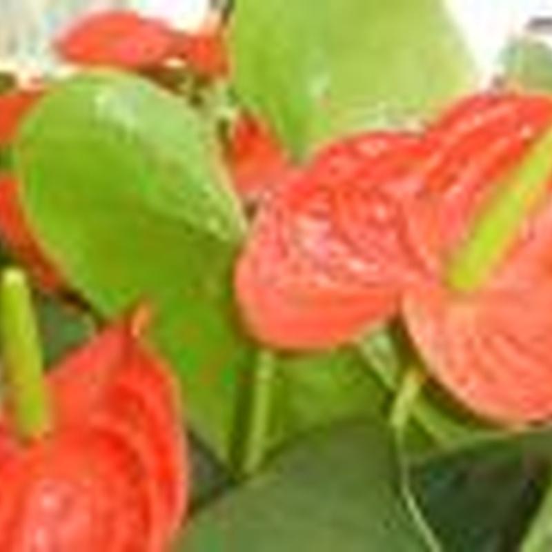 Plantas de interior: Plantas y complementos de Viveros Cidoncha