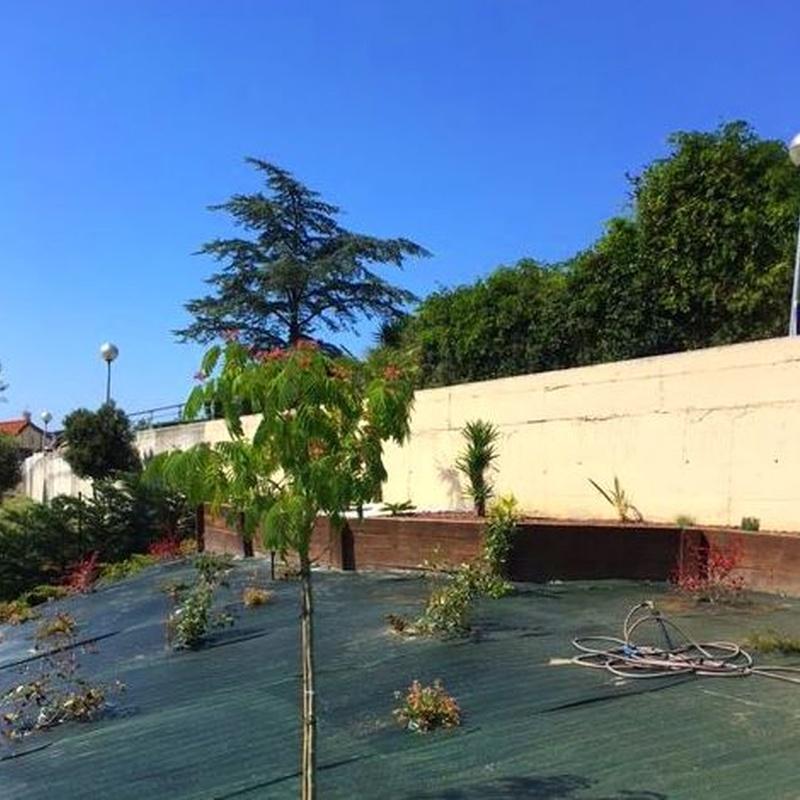 Diseño y paisajismo: Servicios de Jarmant Versalles