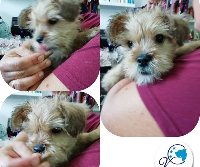 Consulta veterinaria: Servicios de Vetercan