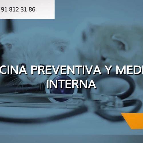 Clínica veterinaria en Villanueva del Pardillo: Lovets