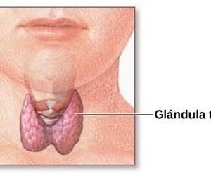 Glándula tiroides: funciones y patologías