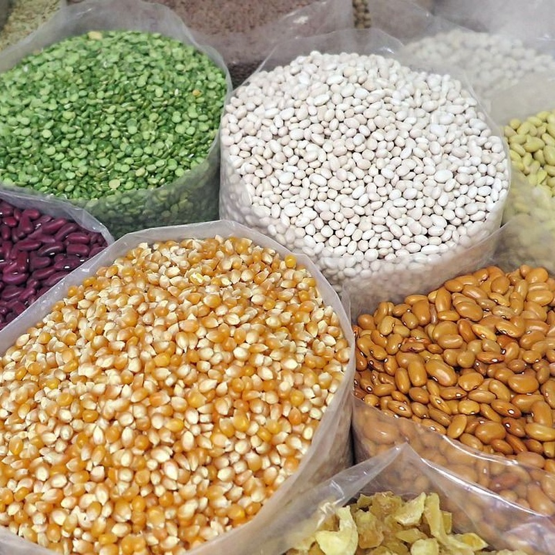 Venta de semillas: Nuestros productos de FITOPALMA, S.L.