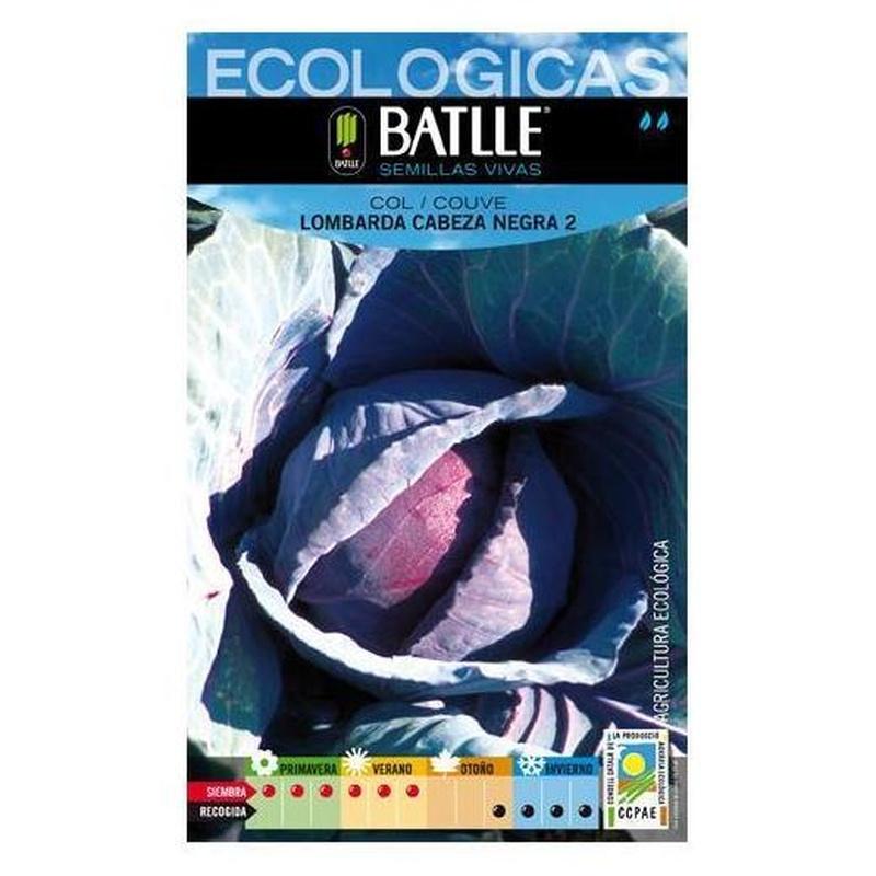 Semillas ecológicas de Col lombarda cabeza negra 2 Ref. 28