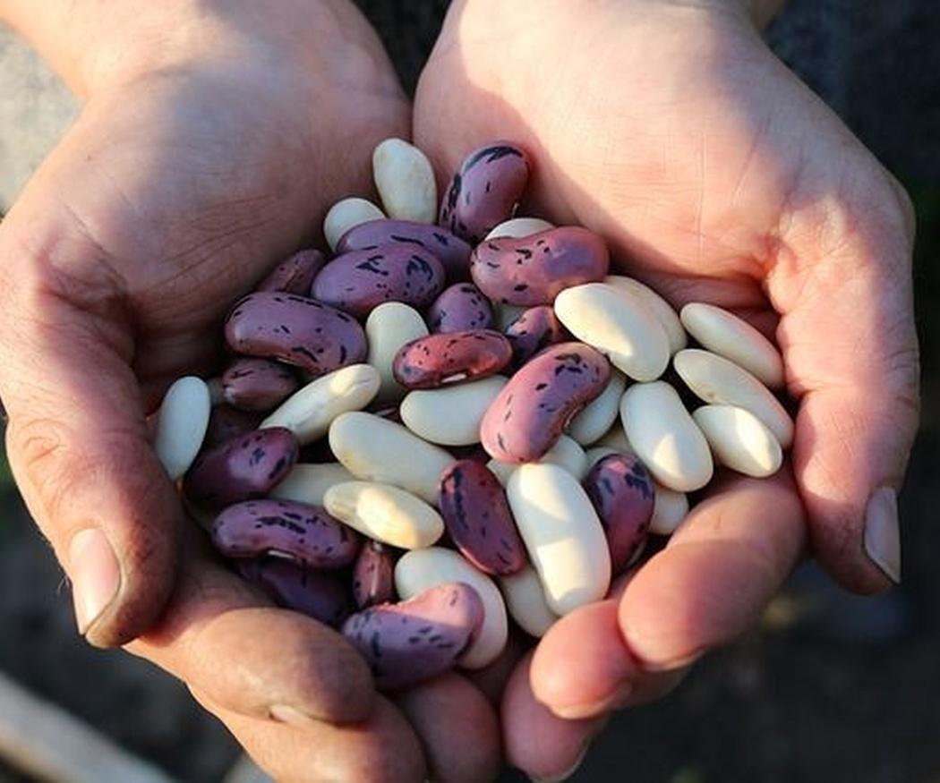 Los beneficios de la fabada asturiana