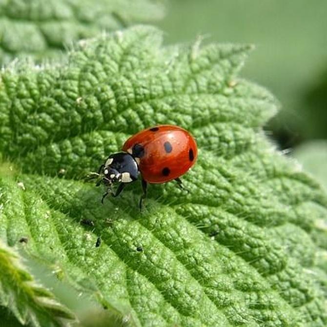 Remedios naturales para eliminar insectos perjudiciales