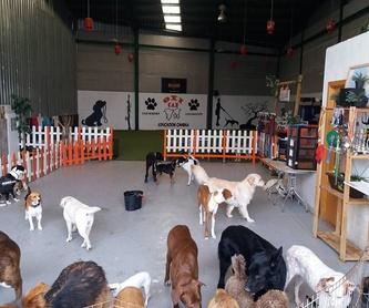 Cursos Agility: Servicios de Centro Canino Oxican