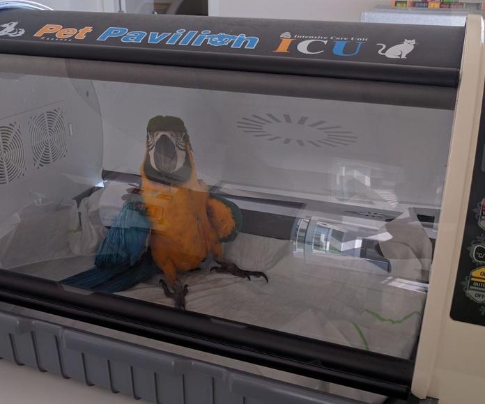 UCI para aves y pequeños mamíferos