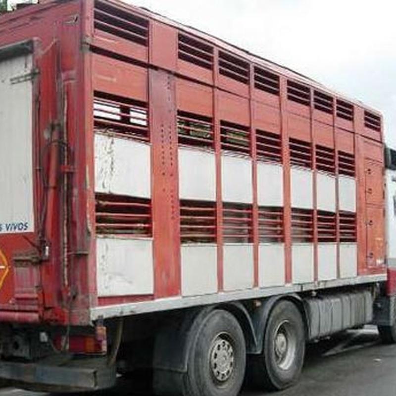 Logística: Servicios de Transportes de Animales Irazola