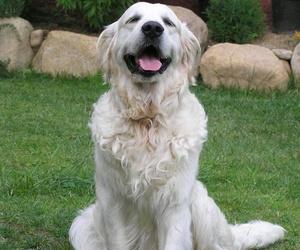 Clínica veterinaria en Sants
