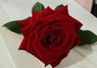 Especial San Valentín 2017