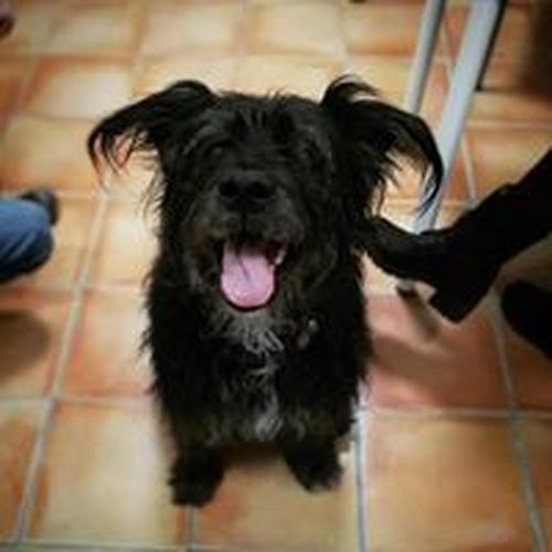 Especialistas veterinarios en Caldes de Montbui