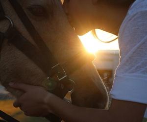 Terapias con caballos en Parets del Vallès