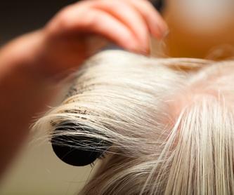 Peinados, corte y color a medida: Servicios de KLASIX