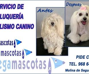 Servicio de peluquería canina en Molina de Segura
