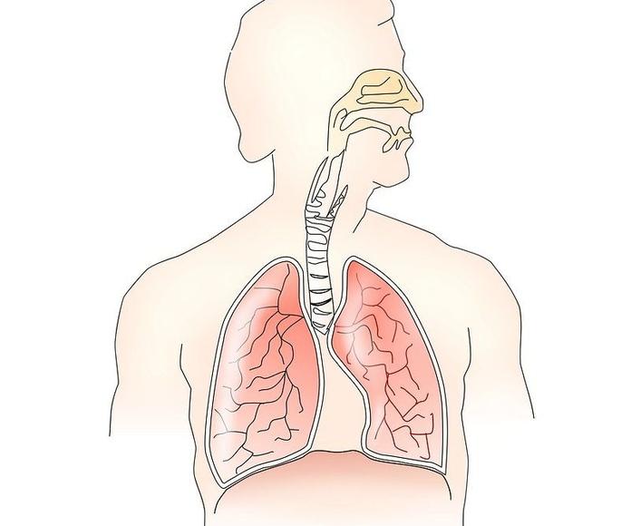 Neumología: Especialidades y Servicios de Centre Mèdic Meisa