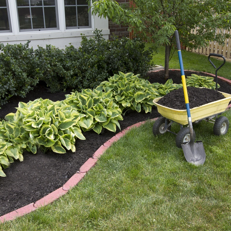 Plantaciones: Servicios de Jardinería Belardi, S.L.