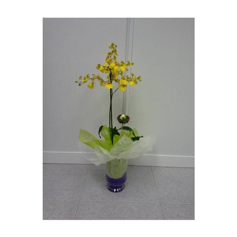 Orquídea: Catálogo de FLORISTERÍA JOMACO  Tanatorio As Burgas