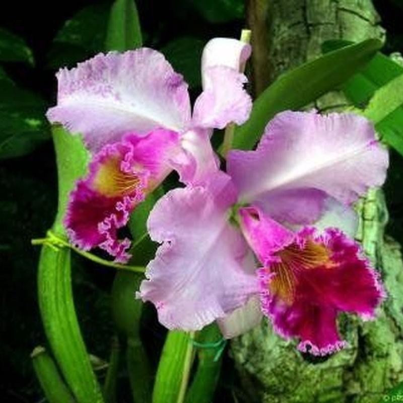 Plantas: Viveros de jardinería de Esspora