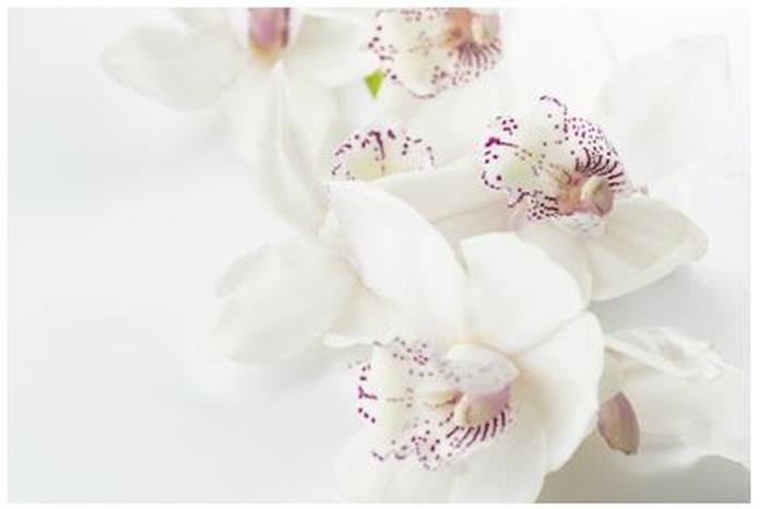 Orquídea del Amor : Terapias de Terapias Alternativas Isabel