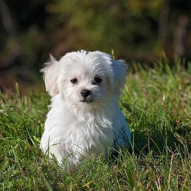 ¿Cuándo y cómo vacunar a tu perro?