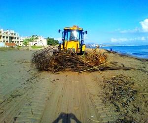 Dénia retira 1.500 toneladas de algas!