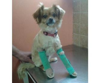 Consulta veterinaria: Servicios y tratamientos de Centro Veterinario Ifach