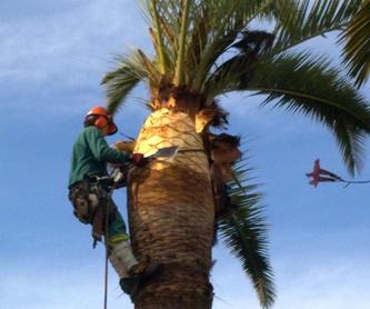 Tratamientos contra el picudo rojo: Servicios de Jardines y paisajes