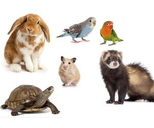 Consulta y Tratamientos de Animales exóticos