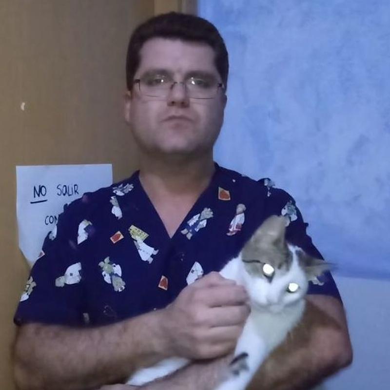 Vídeo consejo - Día mundial del gato: Servicios de Clínica Veterinaria Rocafort