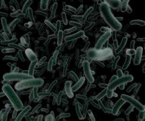 Todos los productos y servicios de Desinfección, desinsectación y desratización: Desinfecciones Benidorm parte del Grupo Anticimex
