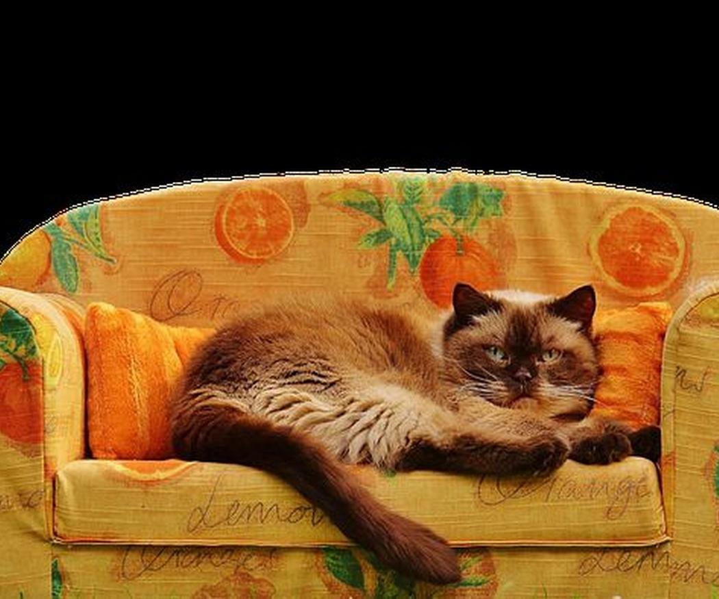¿Comprar otro sofá o tapizar el viejo?