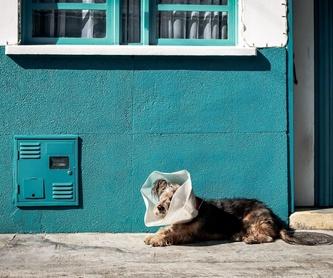 Períodos de corta estancia: ¿Qué hacemos?  de Guardería Canina Estíbaliz