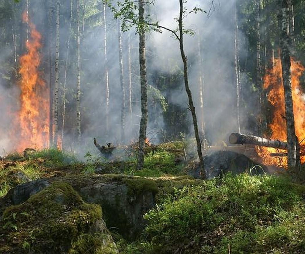 La poda de árboles como alternativa para prevenir incendios forestales