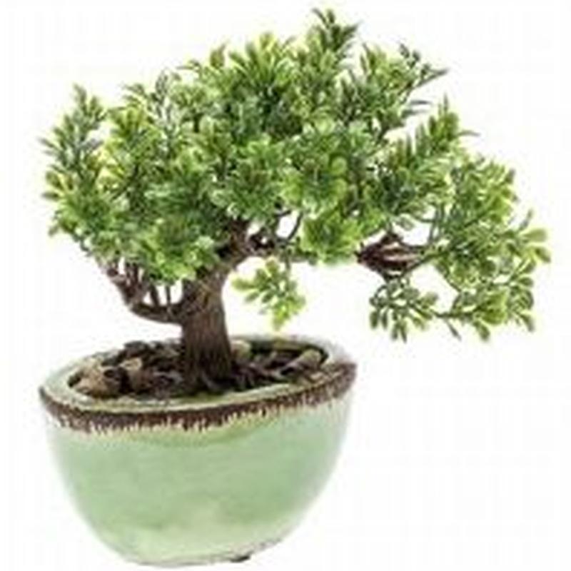 bonsai ficus artificial Valencia