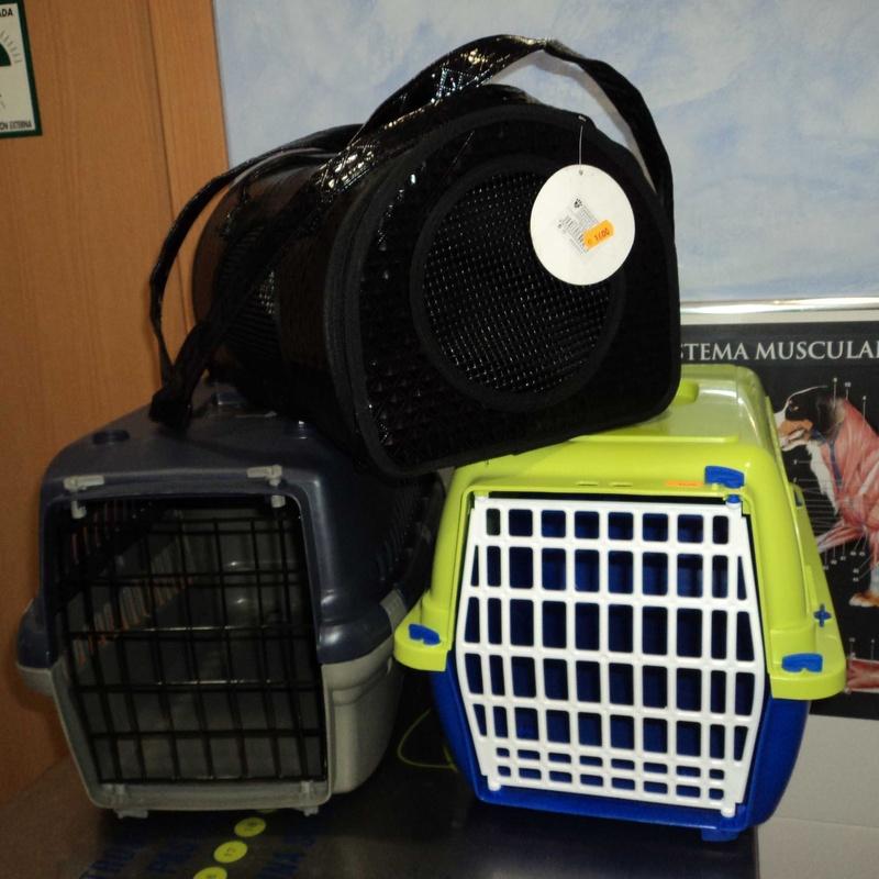 Transportines: Servicios de Clínica Veterinaria Rocafort