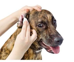 Higiene para tus mascotas