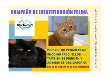 IDENTIFICACIÓN Y CHIP FELINO