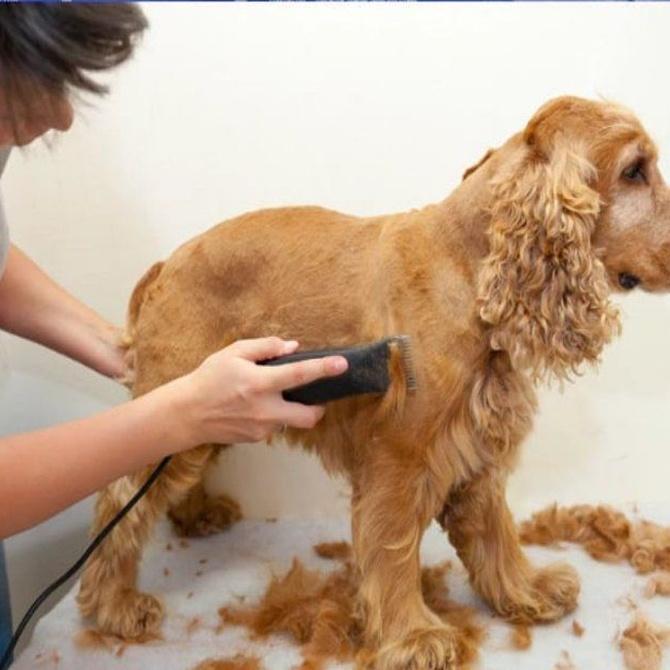 ¿Cuándo cortar el pelo a un perro? (I)