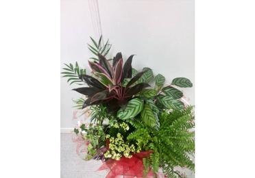 Base con plantas