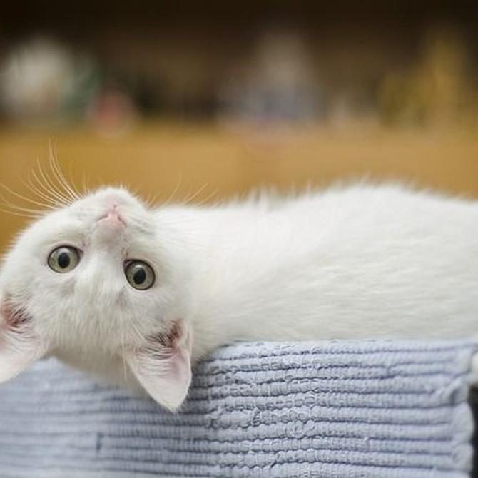 El sofá con gatos