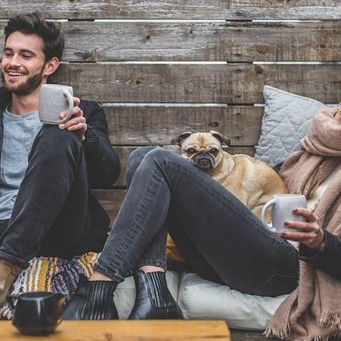 Beneficios en salud de cuidar y tener mascotas