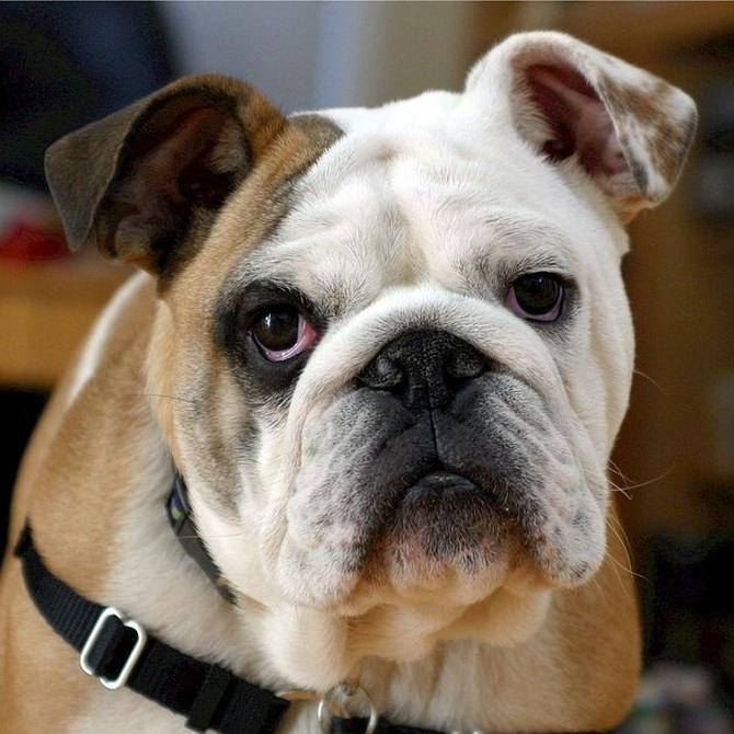 Cirugía veterinaria para mascotas