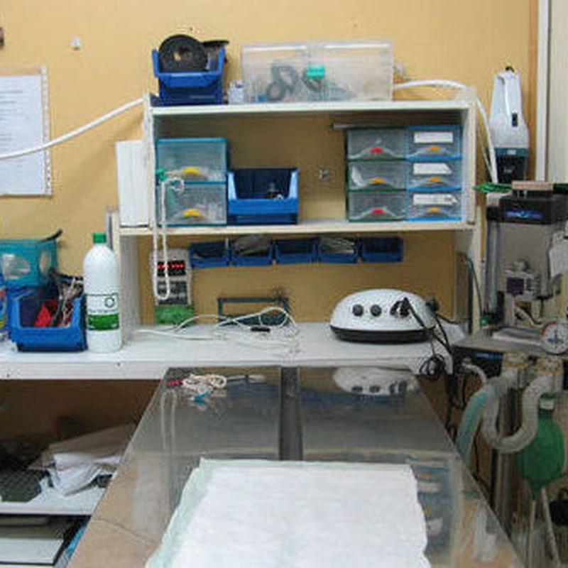 Cirugía y hospitalización: Servicios de Gos i Gat clínica veterinària sl