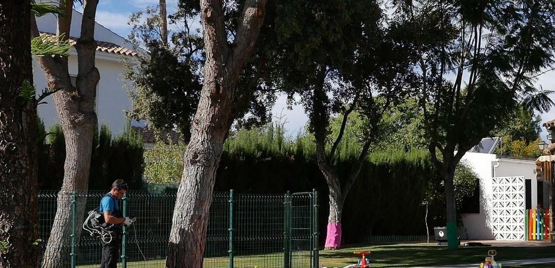 Eliminar la procesionaria del pino en Jerez de la Frontera gracias a profesionales