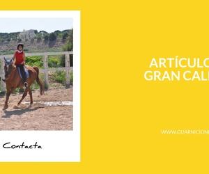 Tienda hípica online en Talavera de la Reina: Guarnicionería Ángel Rubio