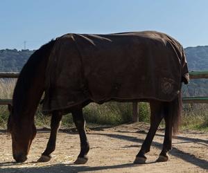 lases de equitación en un entorno natural, en la comarca del Maresme.