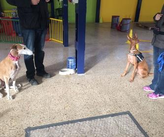 Terapias naturales con animales: Servicios de Cinopolis Adiestramiento y Educación Canina