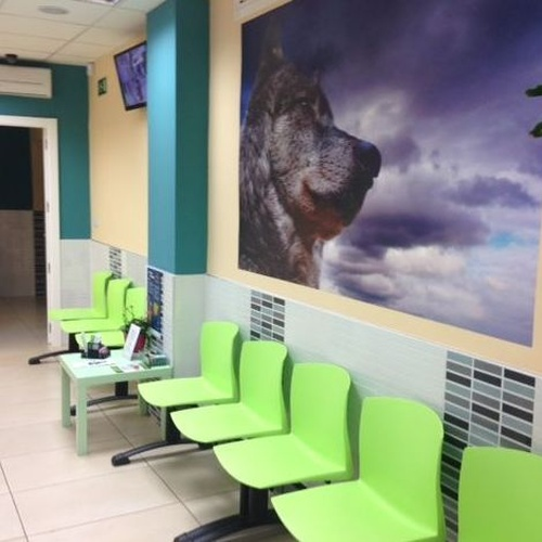 Sala de espera canina, separada de la de los gatos